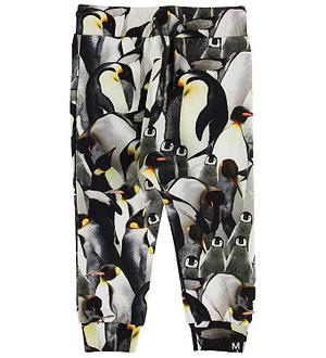 Molo Sweatpants - Solom - Penguins Galore
